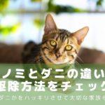 ノミ・ダニ違い-アイキャッチ