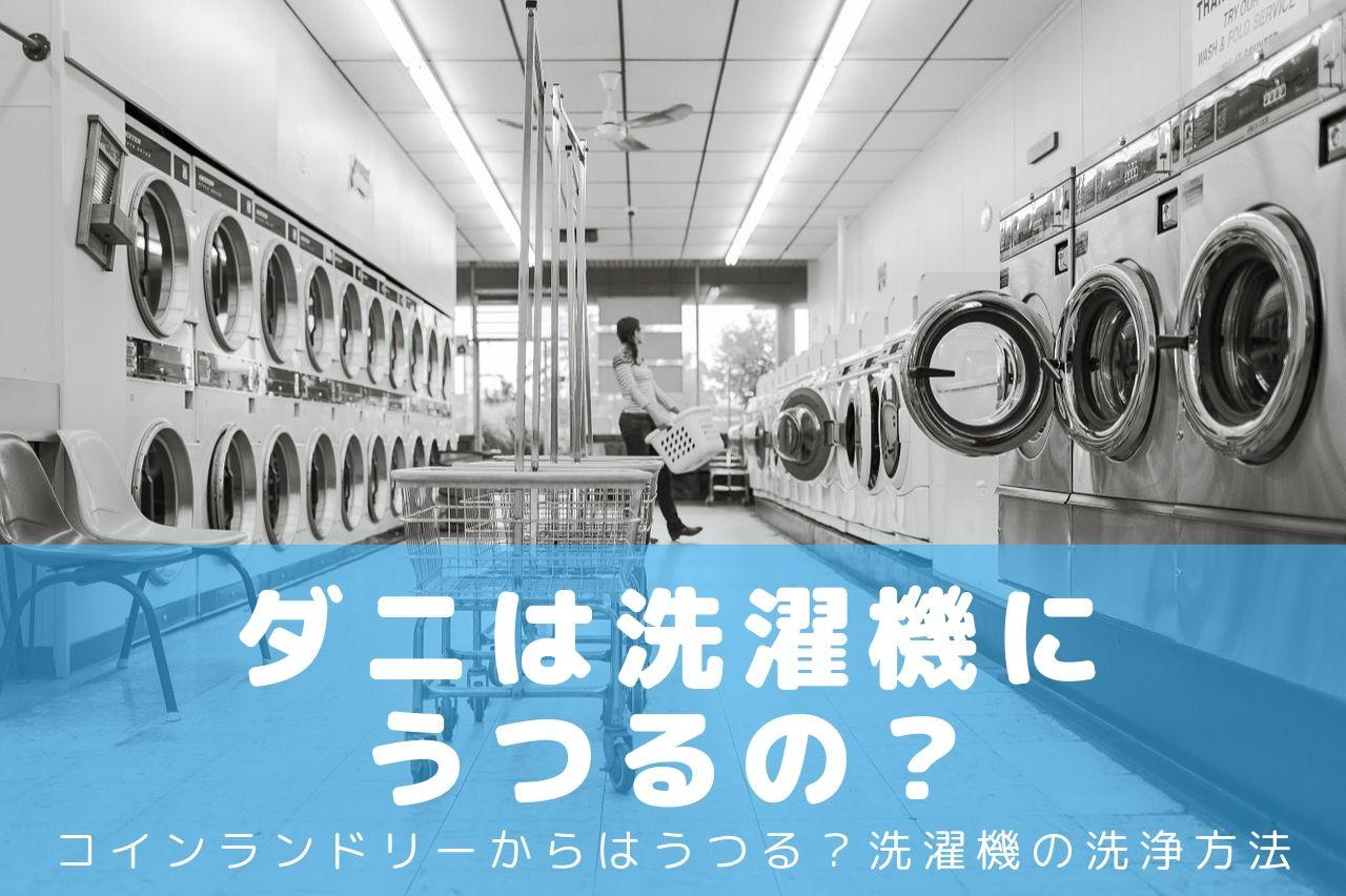 ダニは洗濯機にうつるの?アイキャッチ