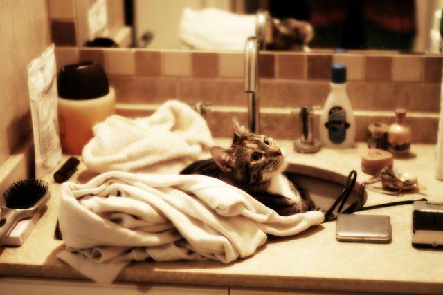 バスルームのシンクの猫