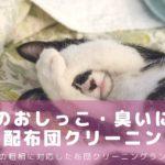 猫のおしっこ・臭いをとる布団クリーニングはここがおすすめランキング!ペットの粗相に-アイキャッチ