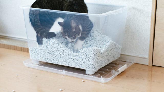 猫砂で遊ぶ猫